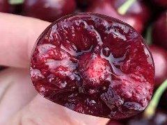 樱桃苗价格_矮huaeba樱桃